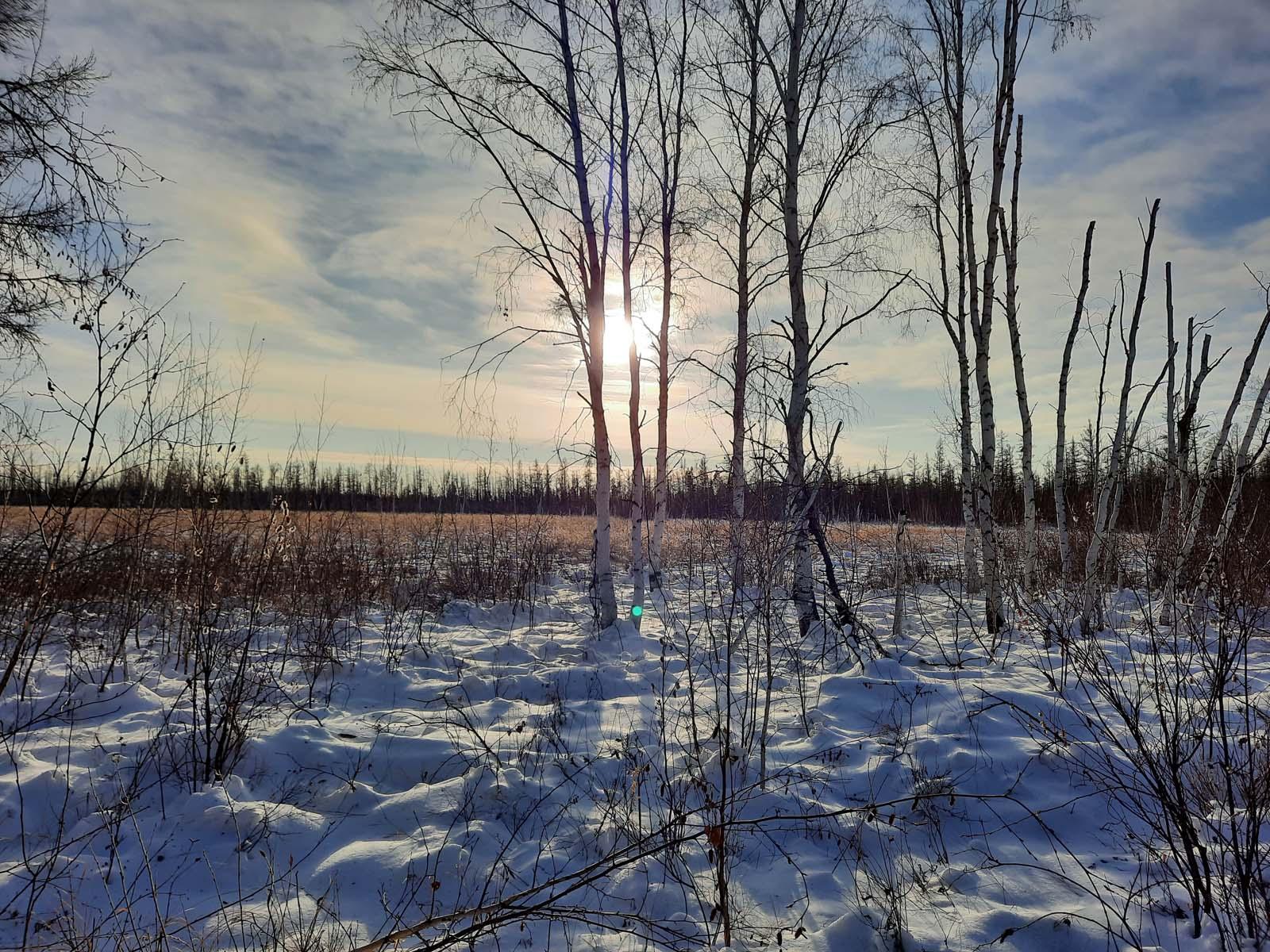Прогулка по зимнему лесу!