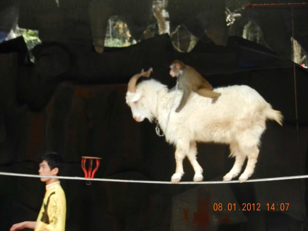 Шоу на острове Обезьян. Санья, Хайнань, январь 2012 года